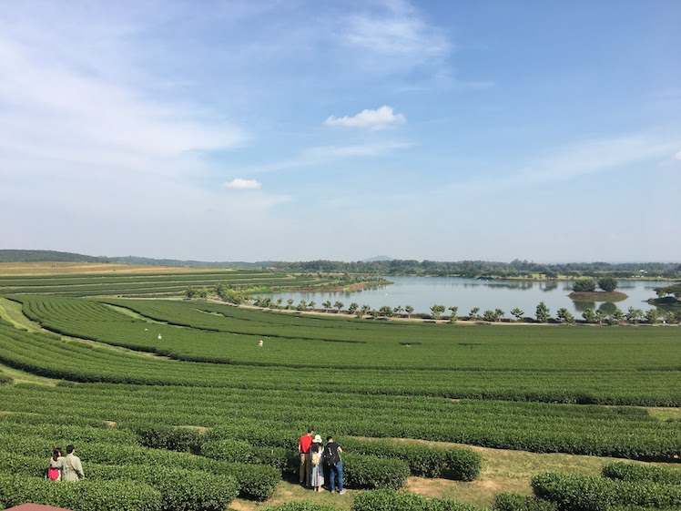 tour of chiangrai