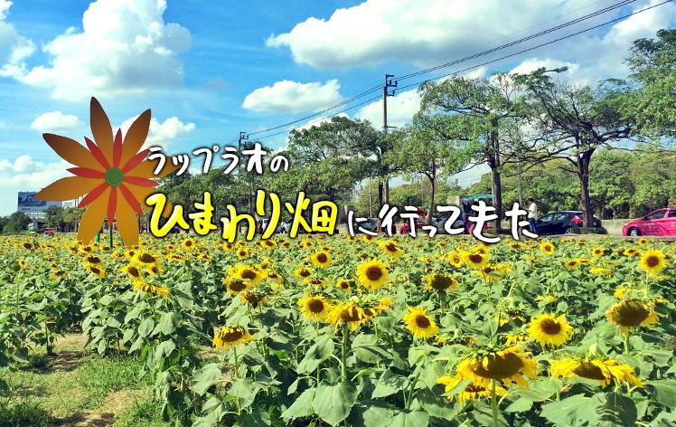 sunflower-ladphrao-bkk