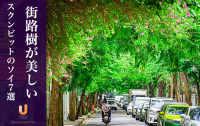 街路樹が美しいスクンビットのソイ7選!